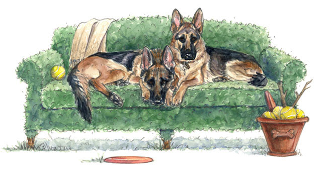German-Shepherd-Illustratio