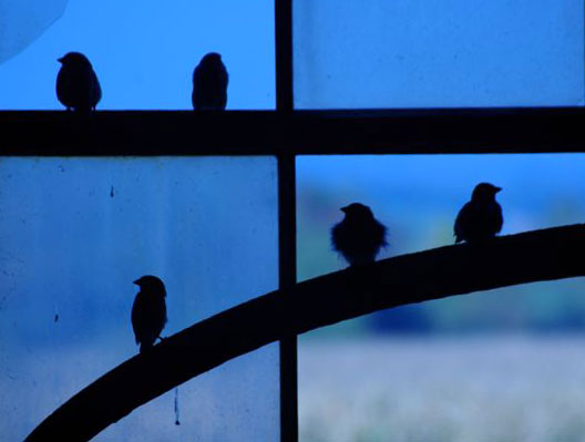 Birds-in-window