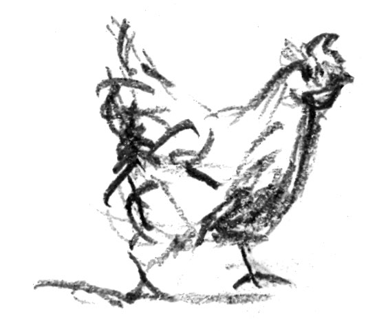 Chicken-Sketch2