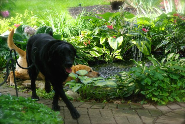 Gracie in the pond