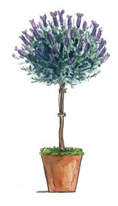 Lavender Topiary